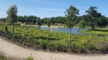 El Bosque del Teatro de Agua